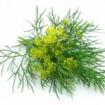 dill1