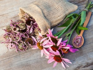 Bunch Of Healing Coneflowers And Sack With Dried Echinacea Flowe